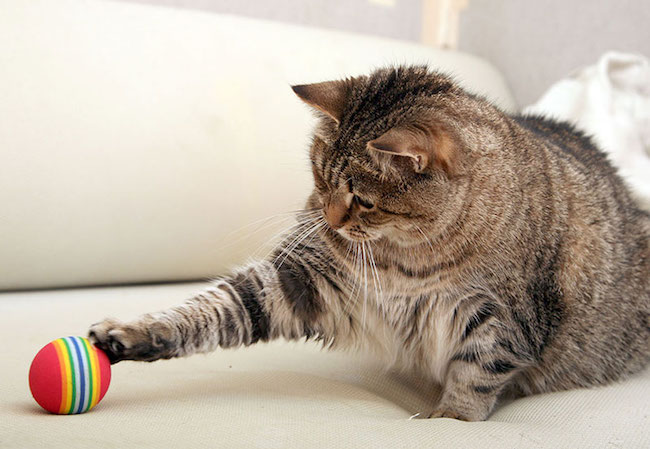 Tips About Worms In Cats –   The Best Tips To Preventing Them post thumbnail image